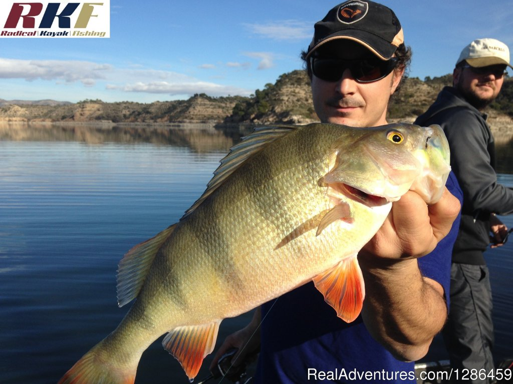 Perch | Image #7/9 | fishing guides Ebro river Spain