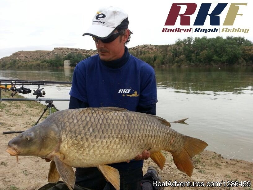 Carp | Image #8/9 | fishing guides Ebro river Spain