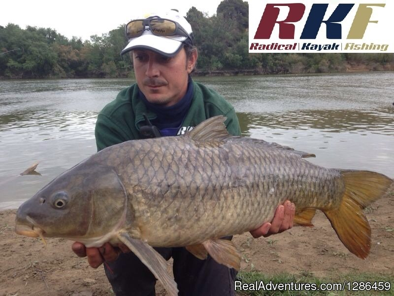 Carp | Image #9/9 | fishing guides Ebro river Spain