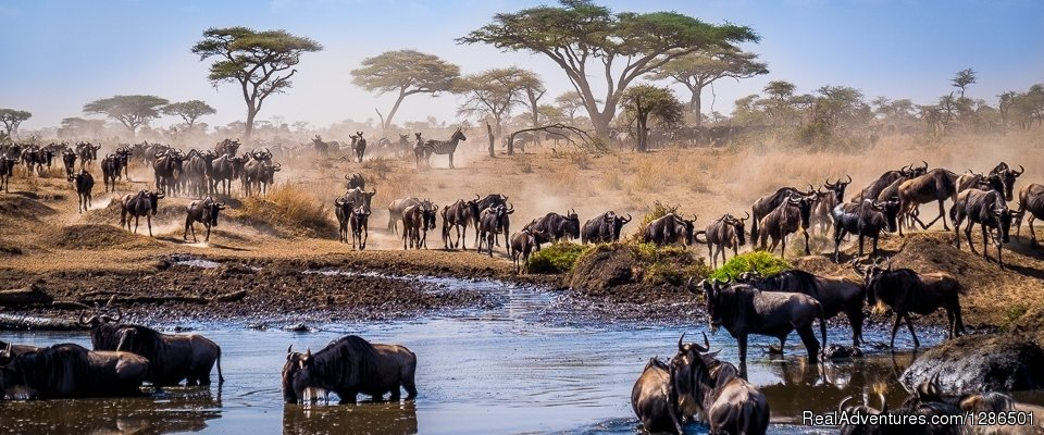 Wildebeest Migration | Image #4/6 | Tosha Adventures
