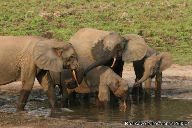 safari to Tarangire home of elephant | Image #5/6 | Tosha Adventures