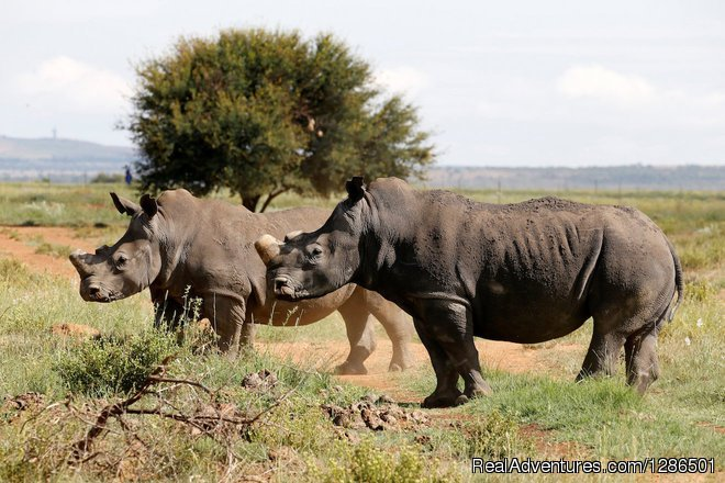 safari to Ngorongoro spoting the Rhino | Image #6/6 | Tosha Adventures