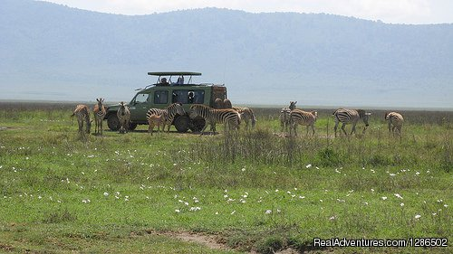 Game Viewing, Ngorongoro Crater | Image #19/20 | Pure Wildness Tanzania