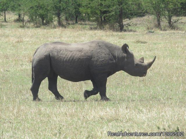Pure Wildness Tanzania