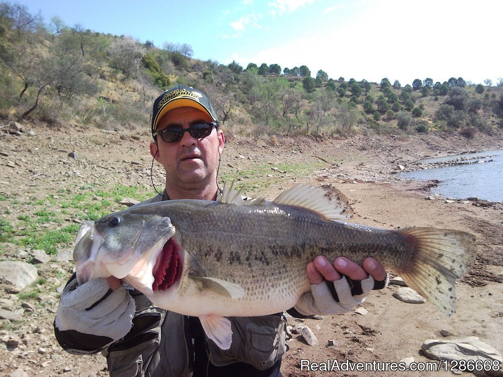 Largemouth Bass | Image #3/5 | Fishing in Portugal