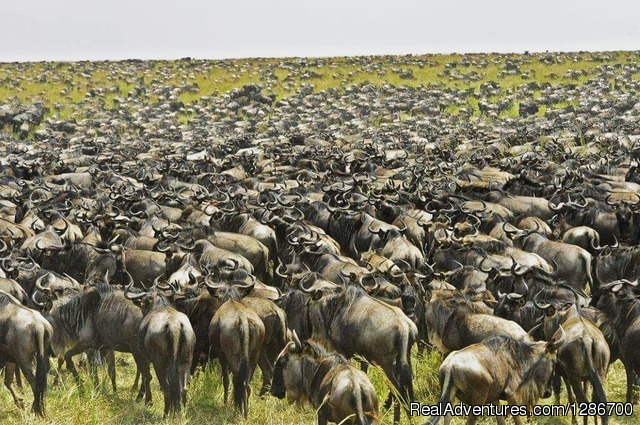 10 Days Serengeti Wildebeest Migration Safari
