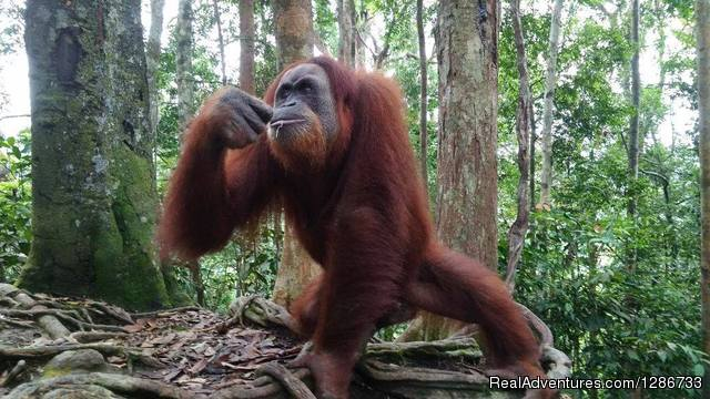1 Day Jungle Trek At Bukit Lawang