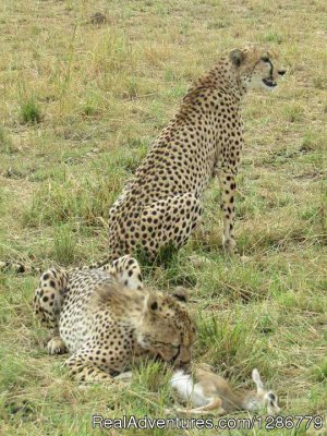 3 Days Maasai Mara Safari Nairobi, Kenya Sight-Seeing Tours