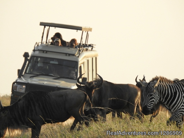 Professional Safari Africa