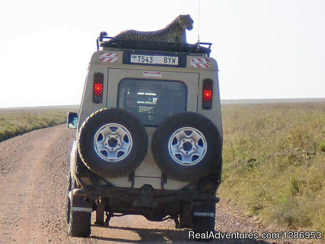 Photographic Safaris in East Africa