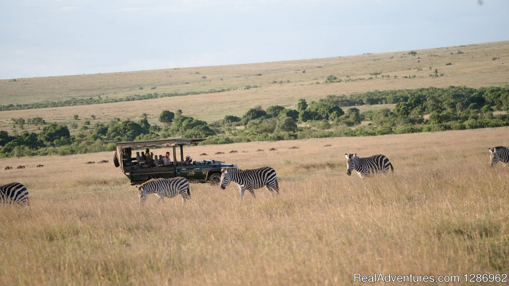 Image #4/9 | Wildlife Tours in Africa