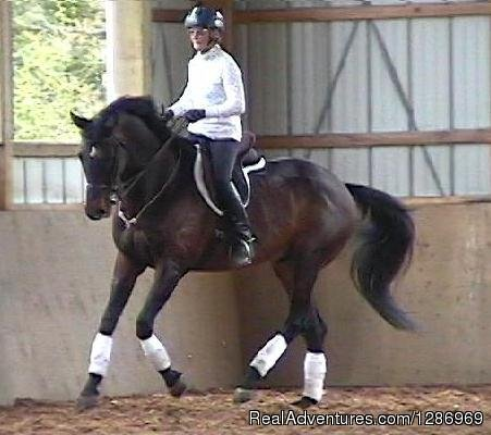 Welcome Home Farm  -  Horse Training | Image #1/1 | Greene, Maine  | Horseback Riding | Welcome Home Farm Riding Center