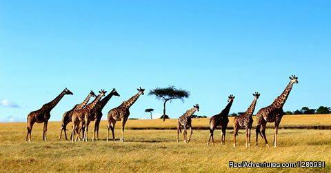 Amazing Kenya Safari