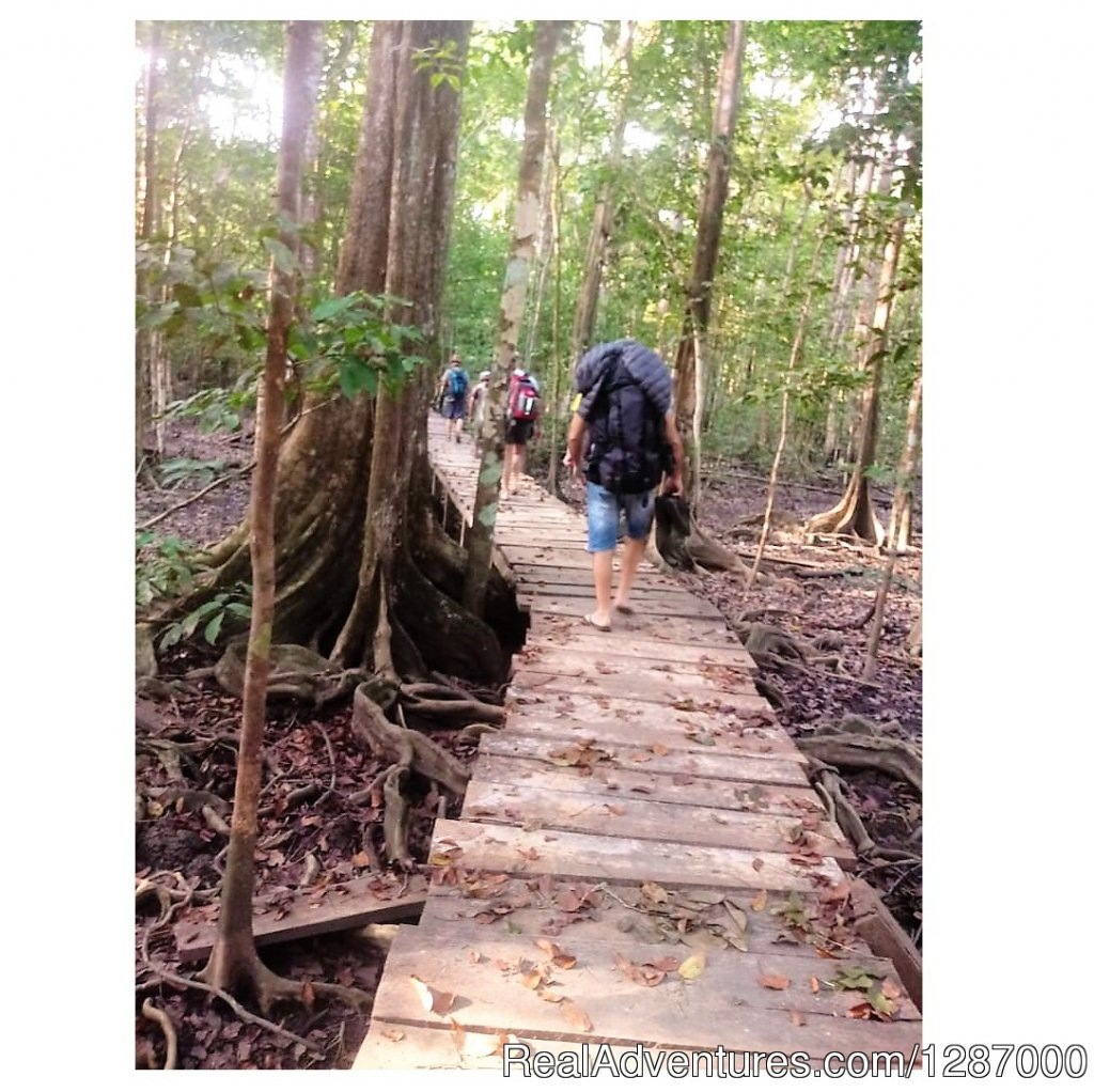 Jungles of Darien | Image #3/11 | Darien Gap Jungle Expedition - Panama