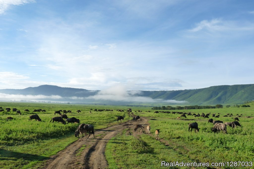 Ngorongoro crater is world's largest unbroken caldera which harbours considerable number of wild animals. It is situated inside the conservation area, in fact, it is the only conservation in the world where visitors are likely to see all of the Big