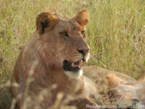 Memorable African safaris Arusha, Tanzania Sight-Seeing Tours