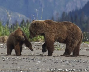 Bear Viewing in Alaska Eco Tours Soldotna, Alaska