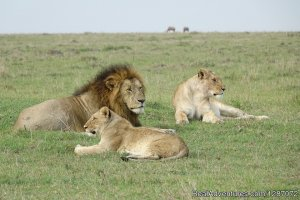 Wonderful Safari Experience in Masai Mara Kenya Sight-Seeing Tours Masai Mara, Kenya