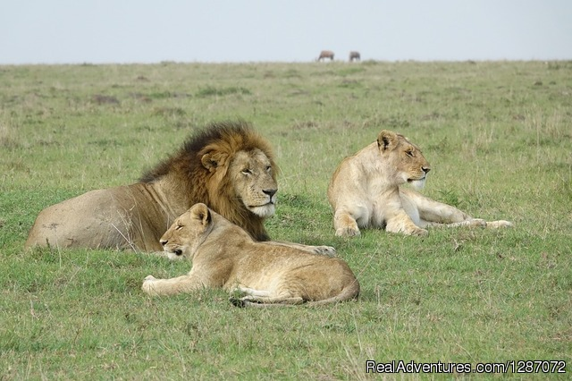 Wonderful Safari Experience in Masai Mara Kenya