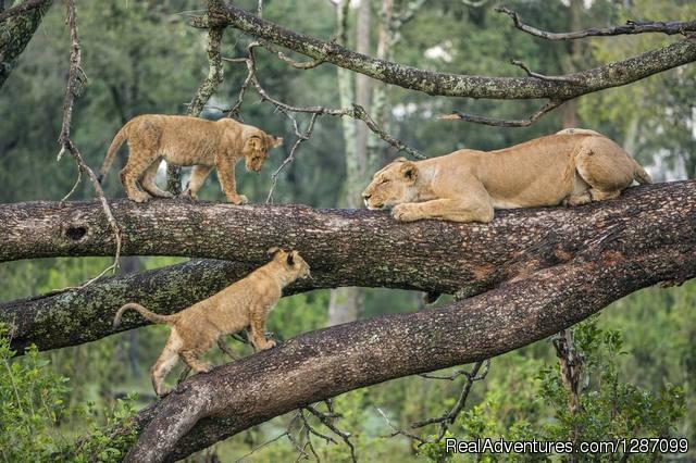 4 Days Fast Safari Tarangire National Park, Sereng