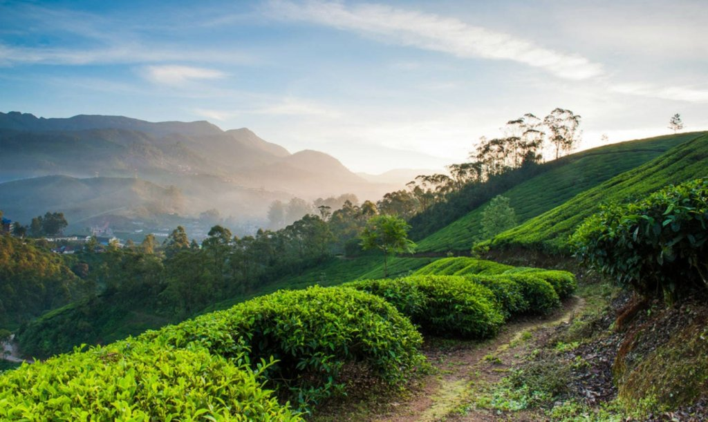 Image #1/1 | Munnar, India | Wildlife & Safari Tours | Munnar Jeep Safari