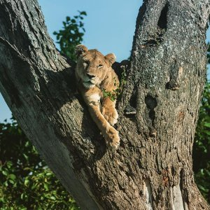 5 Days 4 nights Tanzania luxury safari Arusha, Tanzania Hotels & Resorts
