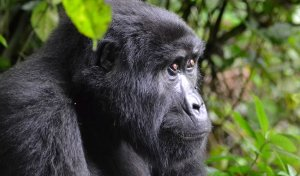 Unrivaled 3 day Gorilla trekking & Cultural tours Rwanda, Rwanda Wildlife & Safari Tours