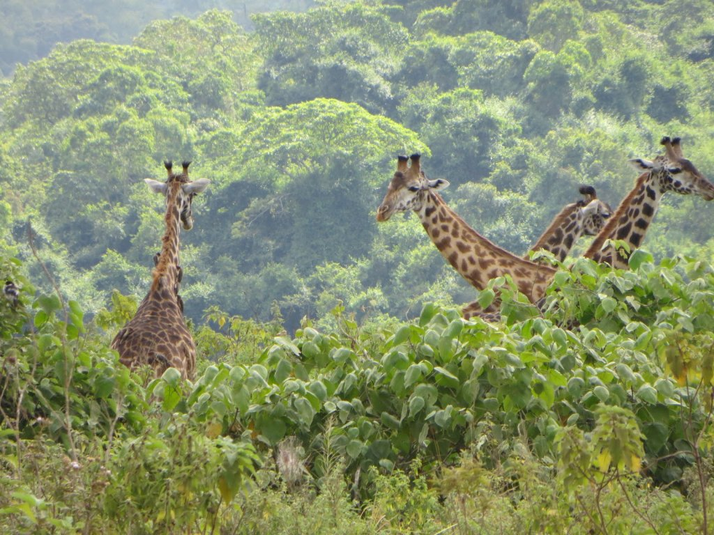 In this camping Safari you will be lucky to spot all Big Five 